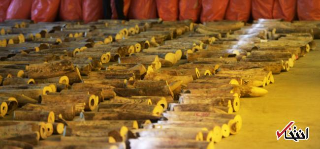 سنگاپور بزرگ ترین محموله قاچاق عاج فیل را ضبط کرد ، بسته ای که بیش از 10 میلیون پوند ارزش دارد
