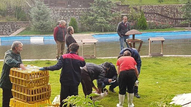 اولین مرحله رهاسازی پرنده در فاز دو باغ پرندگان تهران