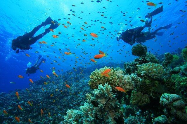 از لاکپشت دریایی تا گیتار ماهی؛ تنوع آبزیان خلیج فارس