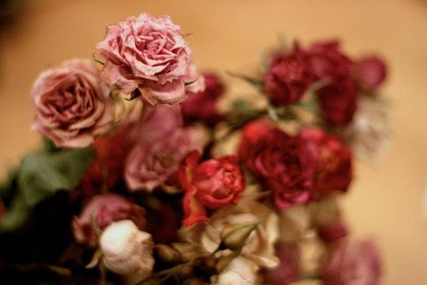 نحوه کاشت و نگهداری گل رز در باغچه و گلدان