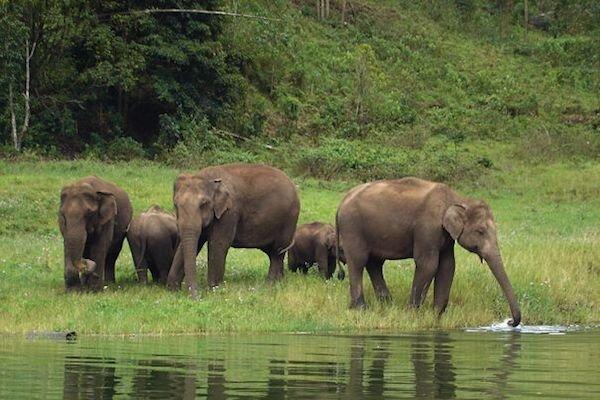 تست کرونا از فیل ها در هند