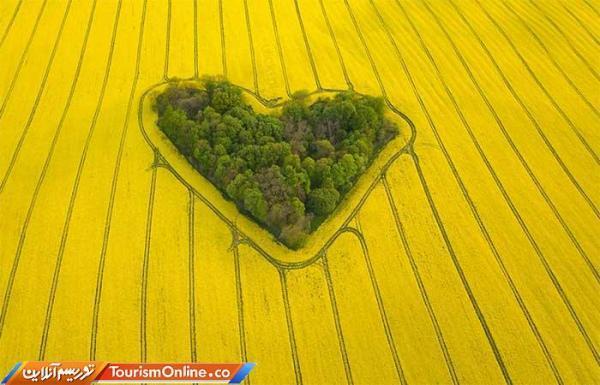 بیشه عشق واقعی اینجاست! ، تصاویر